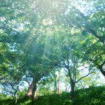 無垢材のフローリングの種類。広葉樹と針葉樹による特長の違いと洋名和名を整理してみた。
