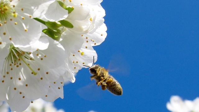 花粉症、対策、乾燥機