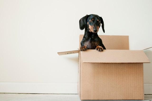 新築購入後の引越し準備でやることまとめ!新居・旧居何から始める?